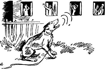 Что делать если у соседа громко лает собака