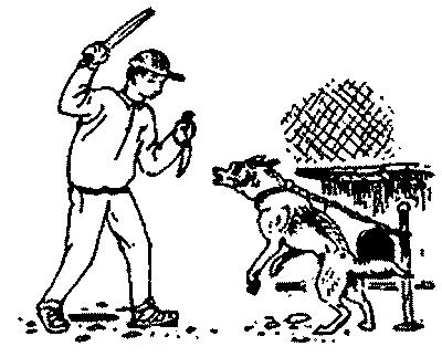 Ваша собака-телохранитель