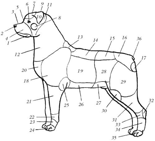 Строение тела собаки: 1 – губа