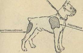 Как собаке правильно сделать внутримышечный укол